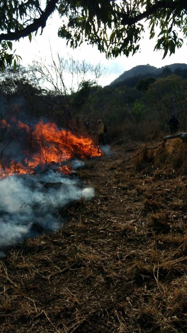 Incendio en parque de Acapulco destruyó tres hectáreas. (Conafor)