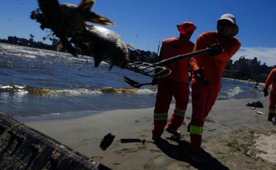 Cientos de peces fueron encontrados muertos en distintas playas de Uruguay. (http://www.elpais.com.uy)