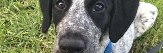 'Grizz' era un pastor escocés de 10 meses entrenado por la Policía de Nueva Zelanda.
