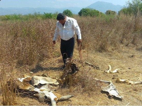 Decretan emergencia por sequía en varias cuencas del país; emiten plan de medidas preventivas (Twitter @OaxacaEstado)