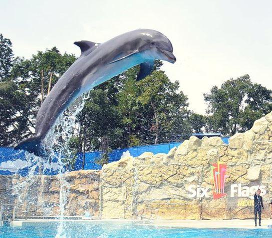 El artículo 60 bis de la Ley establece la prohibición de utilizar mamíferos marinos de cualquier especie, en espectáculos fijos o itinerantes (Twitter/@dolphindiscESP)