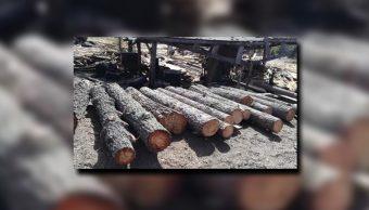 Personal de la Profepa incauta madera en Valparaíso, Zacatecas (Profepa)