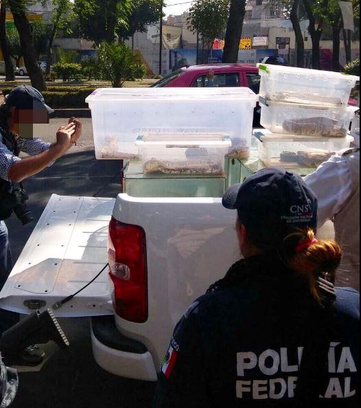 Los detenidos fueron presentados ante la Unidad Especializada en Investigación en Delitos contra el Medio Ambiente donde se determinará su situación jurídica (Twitter/@SSP_CDMX)