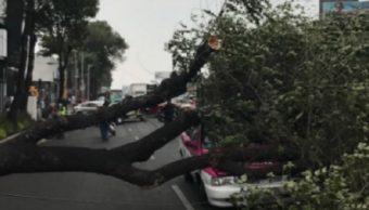 Árbol afecta vialidad de la Ciudad de Mexico