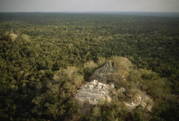 Reserva de la Biósfera de Calakmul, maderas preciosas, granadillo, ciricote, Selva, Campeche, Mayas, oro verde,