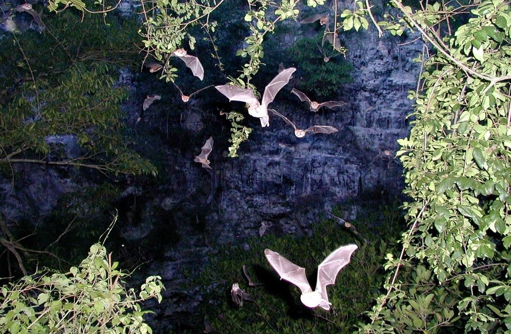 Cueva de los murciélagos en Calakmul, Campeche (@CONANP_mx, archivo)