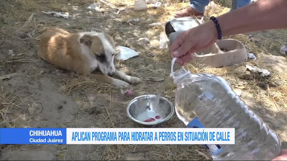 Aplican programa, hidratar, perros callejeros, Chihuahua