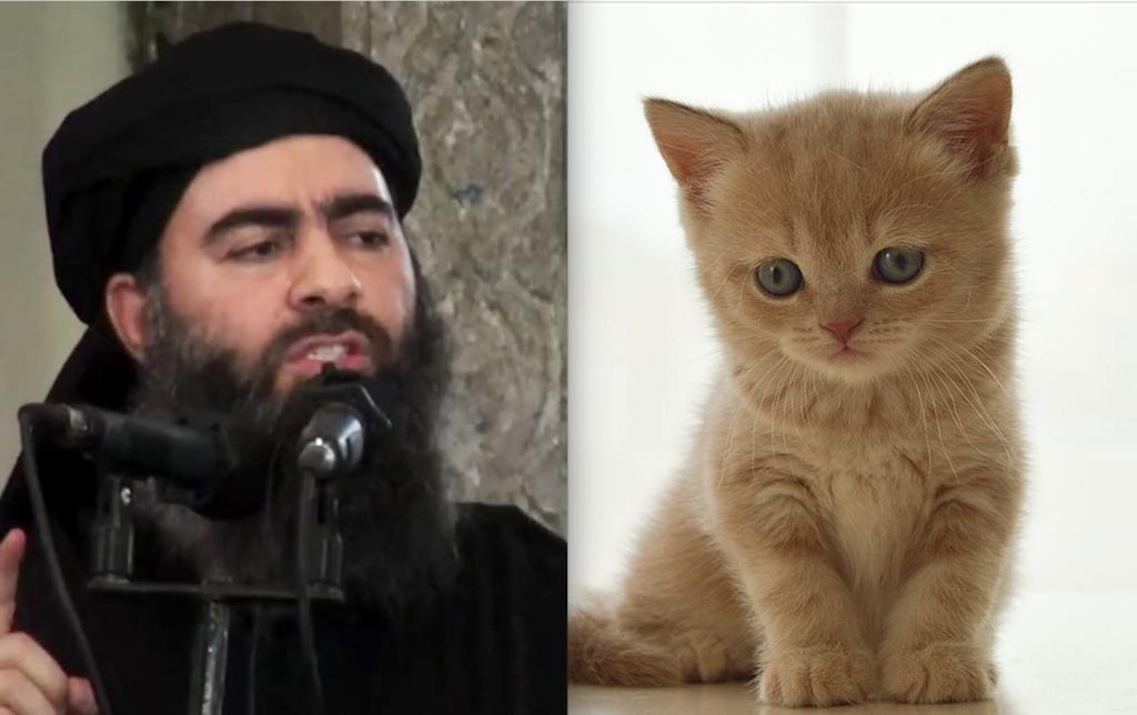 Jihadi Cool, Estado Islámico, gatitos, memes