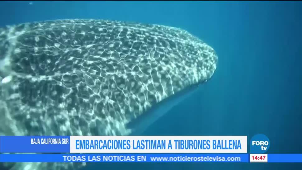 Embarcaciones Lastiman, Tiburon Ballena, Baja California, Embarcaciones Turisticas