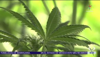 Estado de México, primera entidad de México, tratamientos con marihuana medicinal, marihuana medicinal