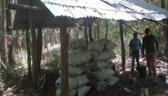 Profepa, Carbon Vegetal, Campeche, Medio Ambiente, Seguridad