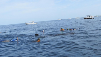 Avistamiento de tiburón ballena en Quintana Roo.