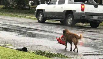 perrito, huracán, Harvey, comida, croquetas, paquete
