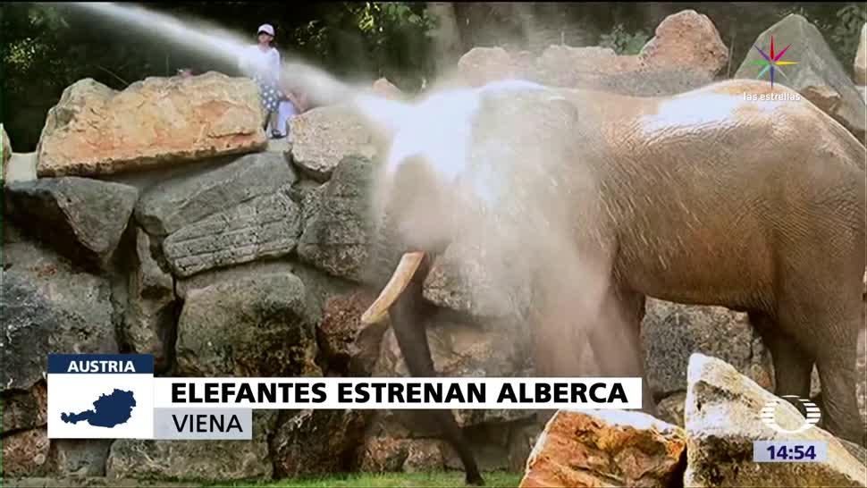Elefantes Zoologico Viena Estrenan Alberca