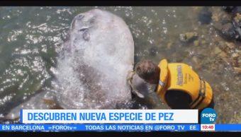 Extra, Descubren, especie, pez