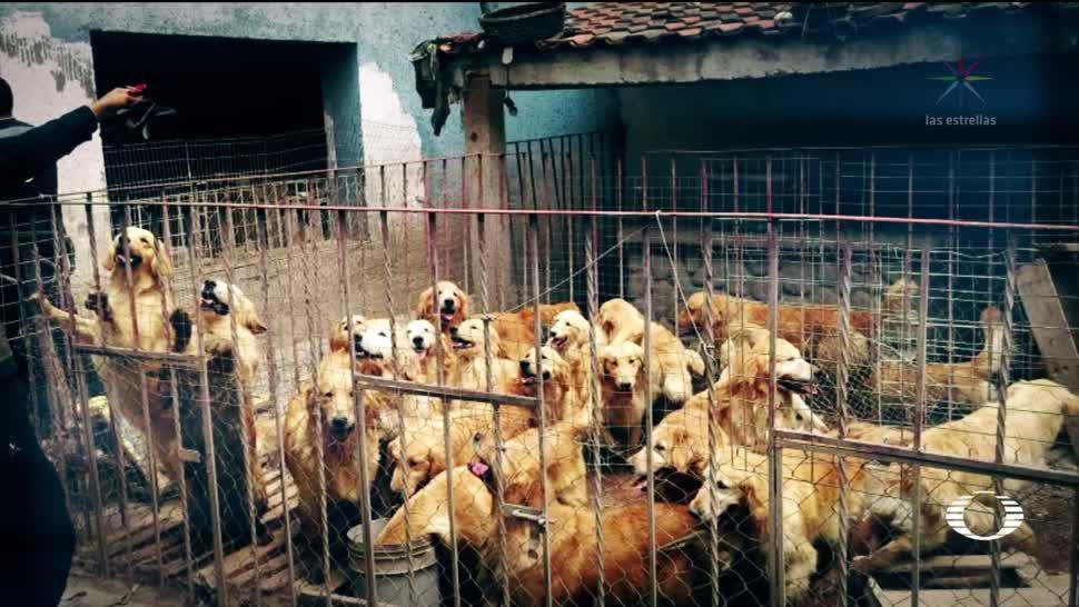 Rescatan 38 perros criadero clandestino CDMX
