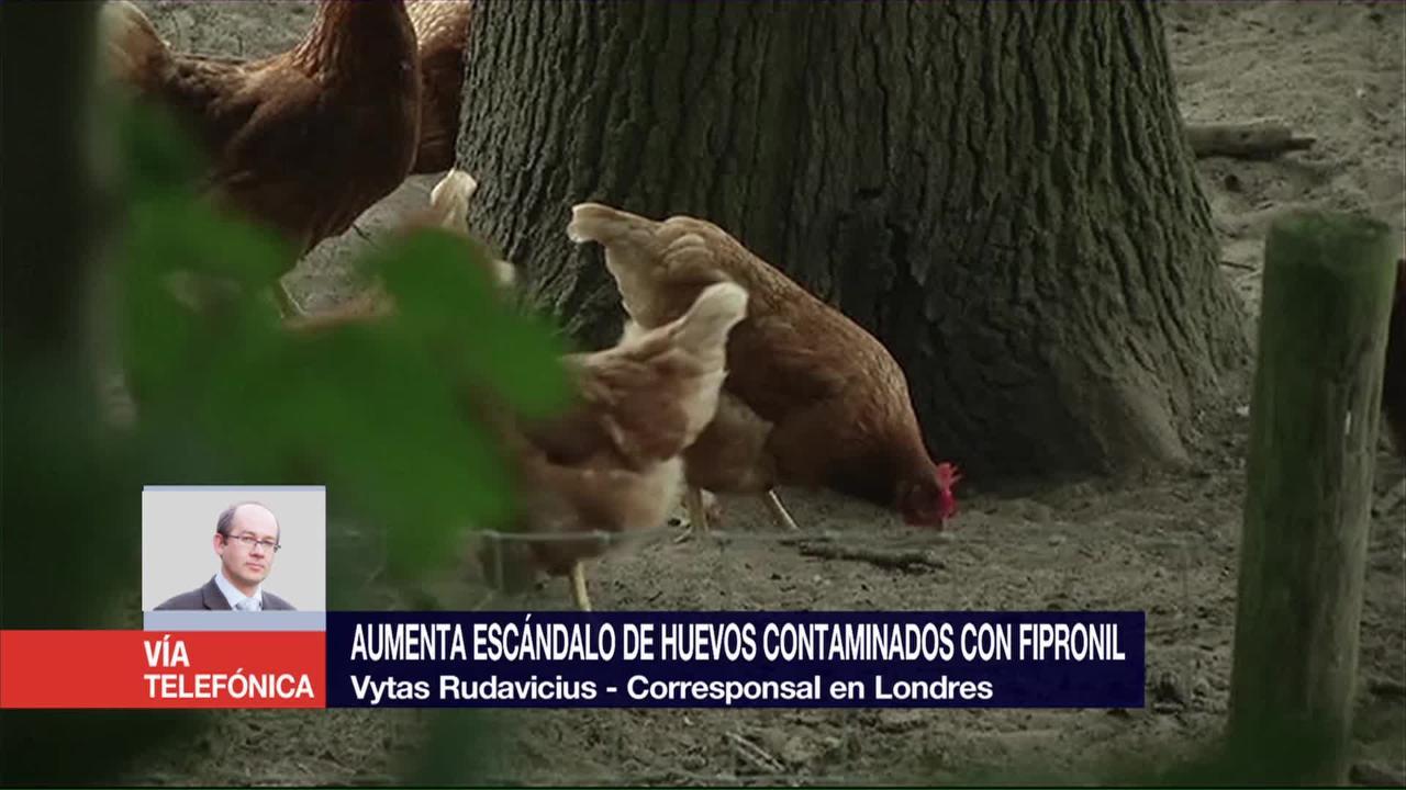 Aumenta, escándalo, huevos infectados, Europa