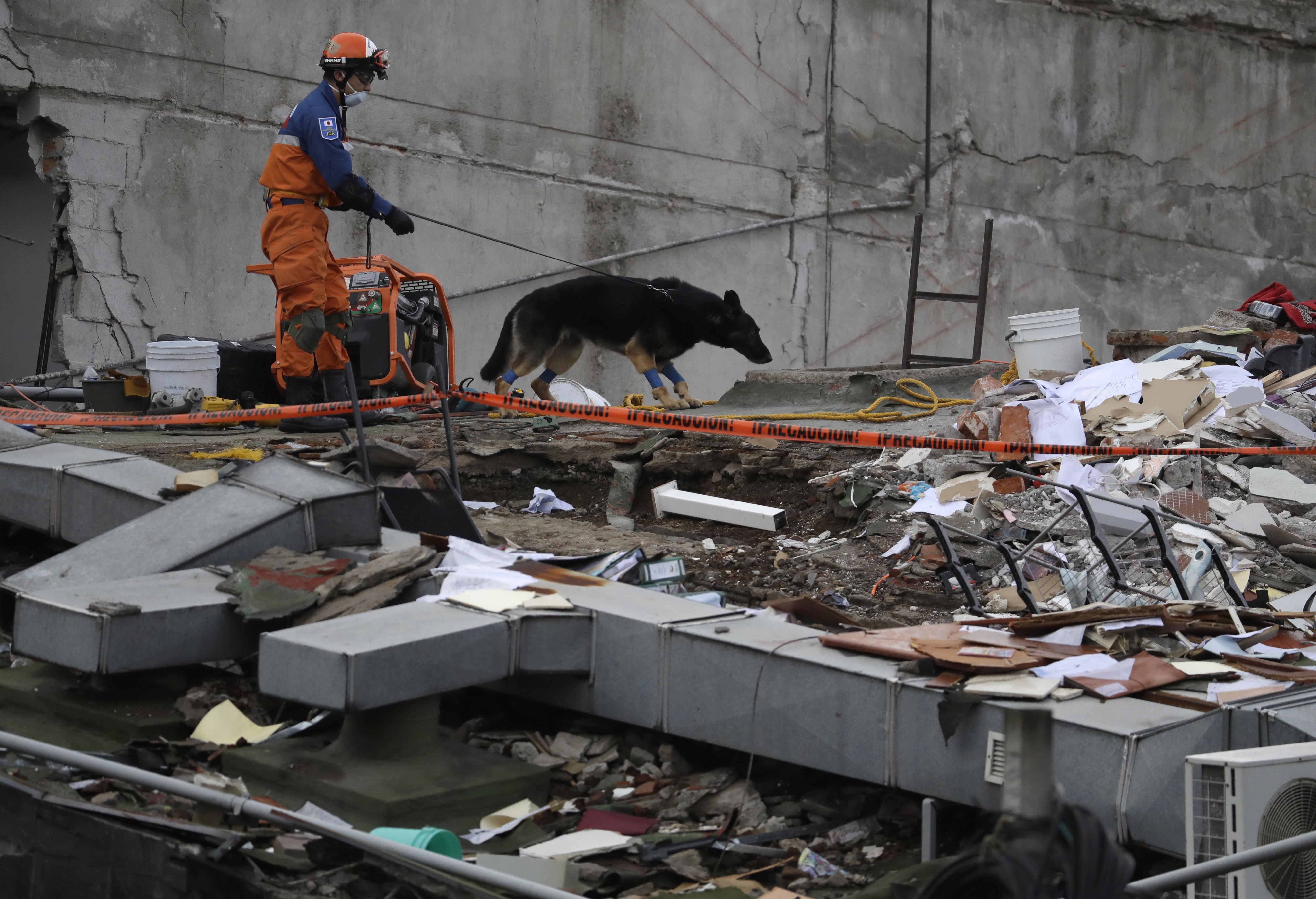 Binomios caninos, básicos para el rescate de víctimas