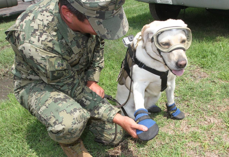 Armada Dog Rescue