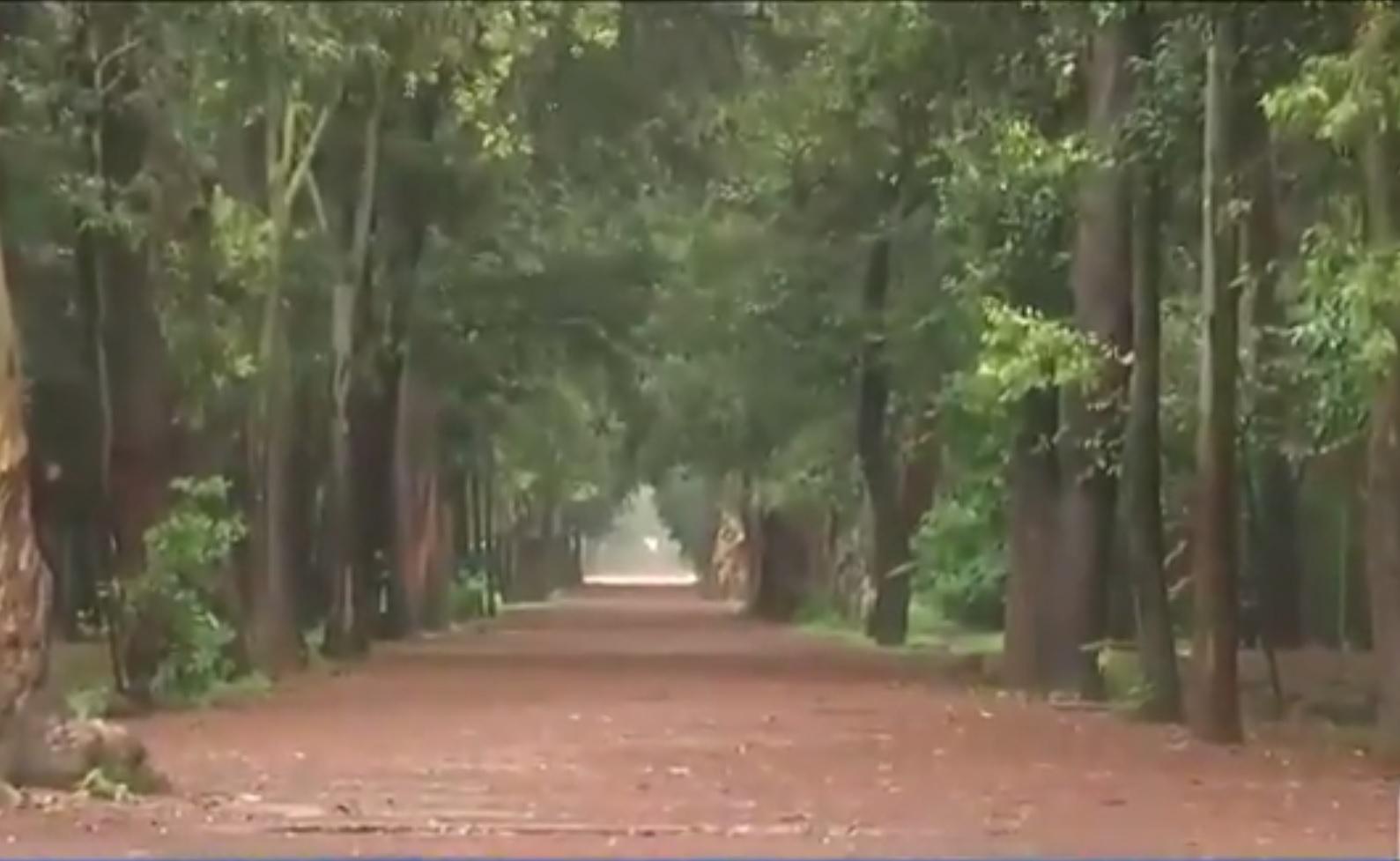 Cierran el parque viveros de coyoac n por mantenimiento for Viveros zona sur