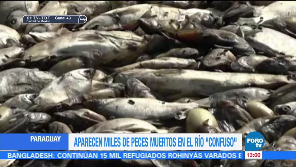 Aparecen miles de peces muertos en río de Paraguay
