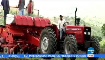Piden eliminar bloqueos para uso de transgénicos en el maíz mexicano