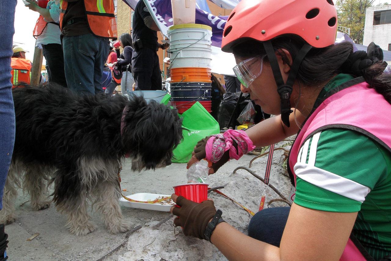 perros rescatados, Protección Civil, sismo CDMX, adopción