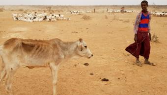 Intensa sequía afecta al ganado en Etiopía