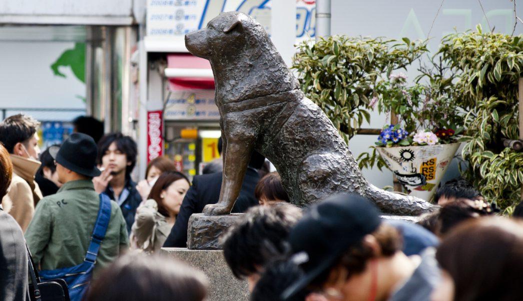 Cosas que no sabías de Hachiko, el perro más fiel
