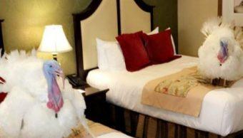 Pavos que indultará Trump se alojan en hotel de lujo en Washington