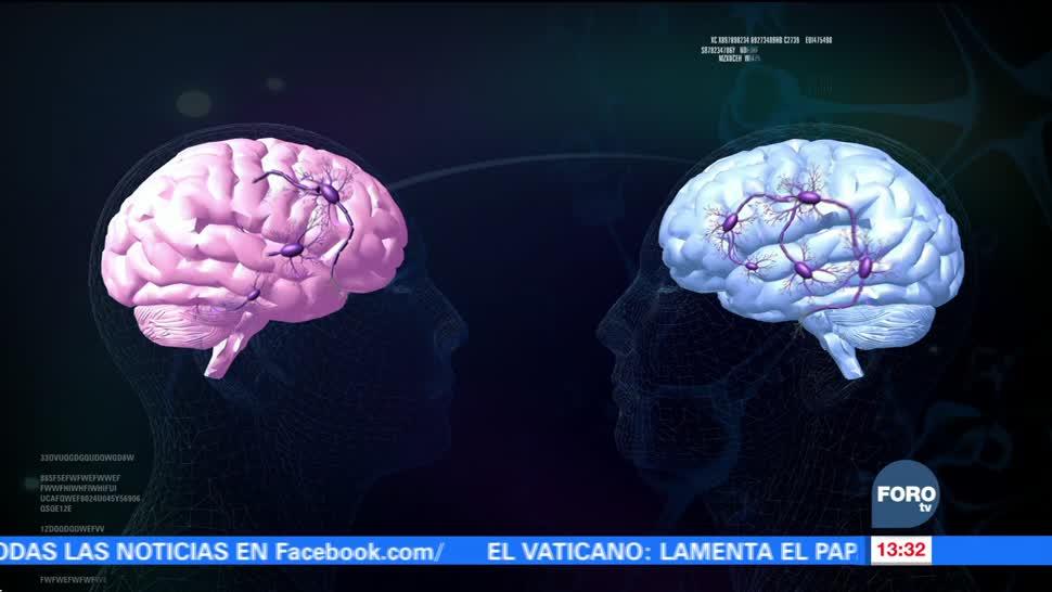 ¿Existen diferencias entre los cerebros de las mujeres y los hombres?