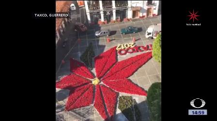 Flor Nochebuena Monumental Taxco