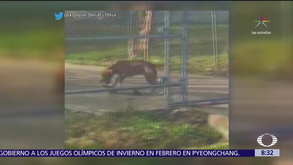 Un perro domina la patineta en Florida