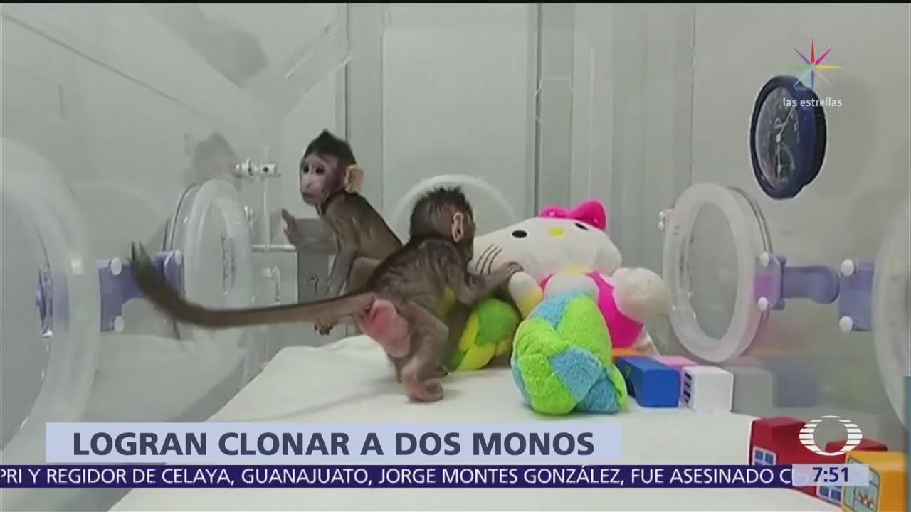 Científicos chinos logran la clonación de dos monos