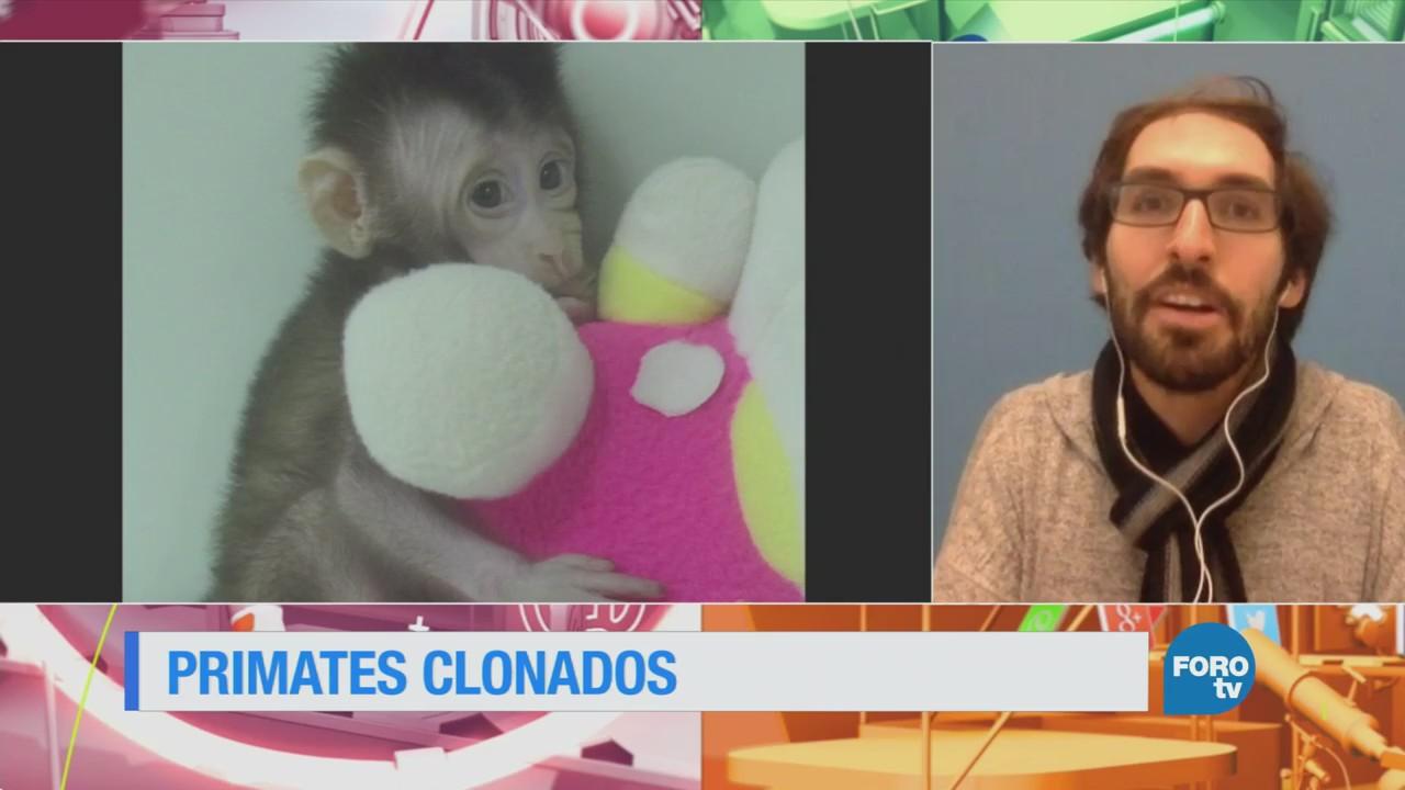 Científicos clonan exitosamente a dos primates