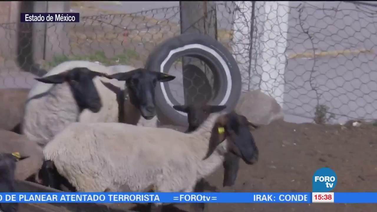 Frío provoca muerte de ganado en el Nevado de Toluca