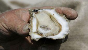 Muere mujer tras comer ostras crudas con batería 'come carne'