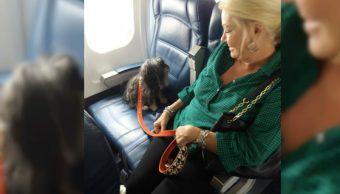 delta airlines pedicar certificado de comportamiento de perros