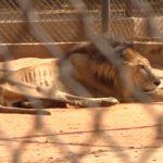 Zoológicos de Venezuela sacrifican animales enfermos por escasez de alimentos