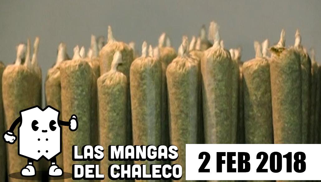Mangas Chaleco Frío Candidatos Probado Marihuana