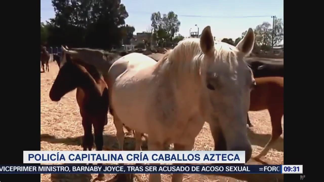 Extra Extra: Policía capitalina cría caballos azteca