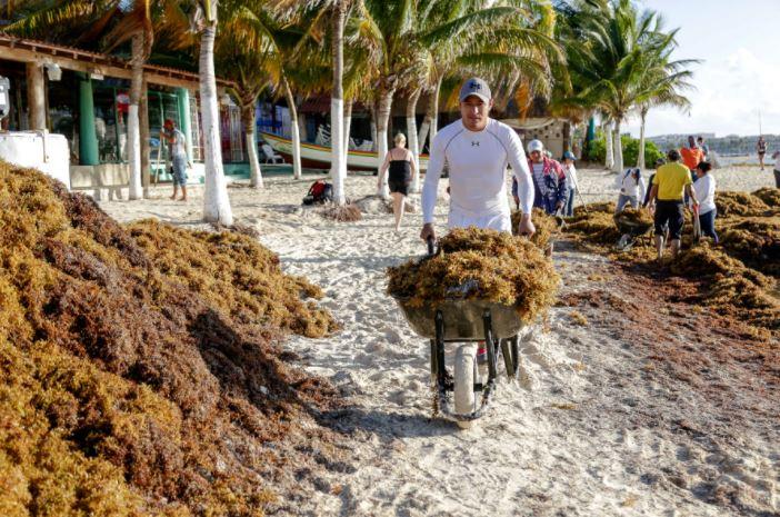 Frentes fríos provocan arribo de sargazo en playas de Quintana Roo