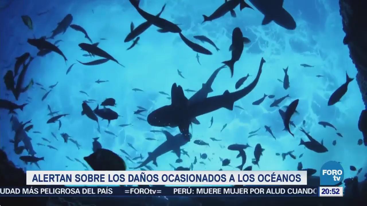 Alertan sobre los daños ocasionados a los océanos