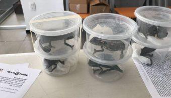 Decomisan reptiles vivos en recipientes de plástico, en San Luis Potosí