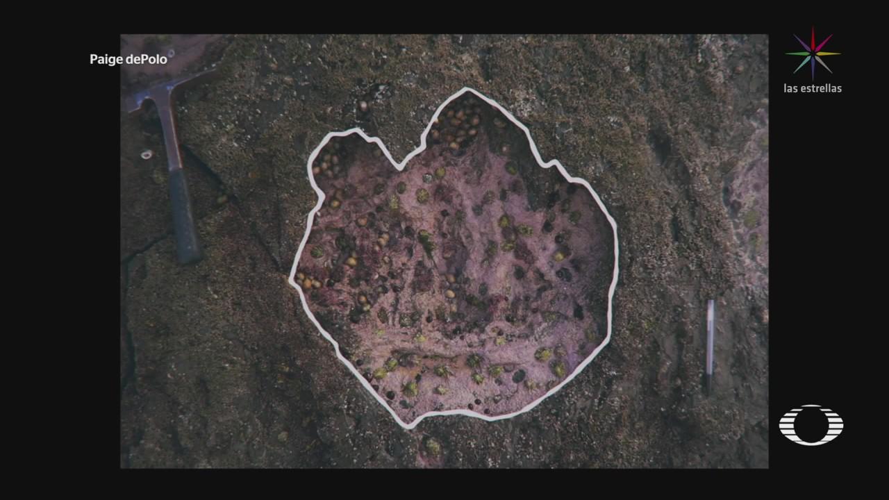 Encuentran fósiles de huella de dinosaurio en Escocia