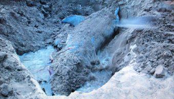 Profepa atiende varamiento de dos delfines en Veracruz