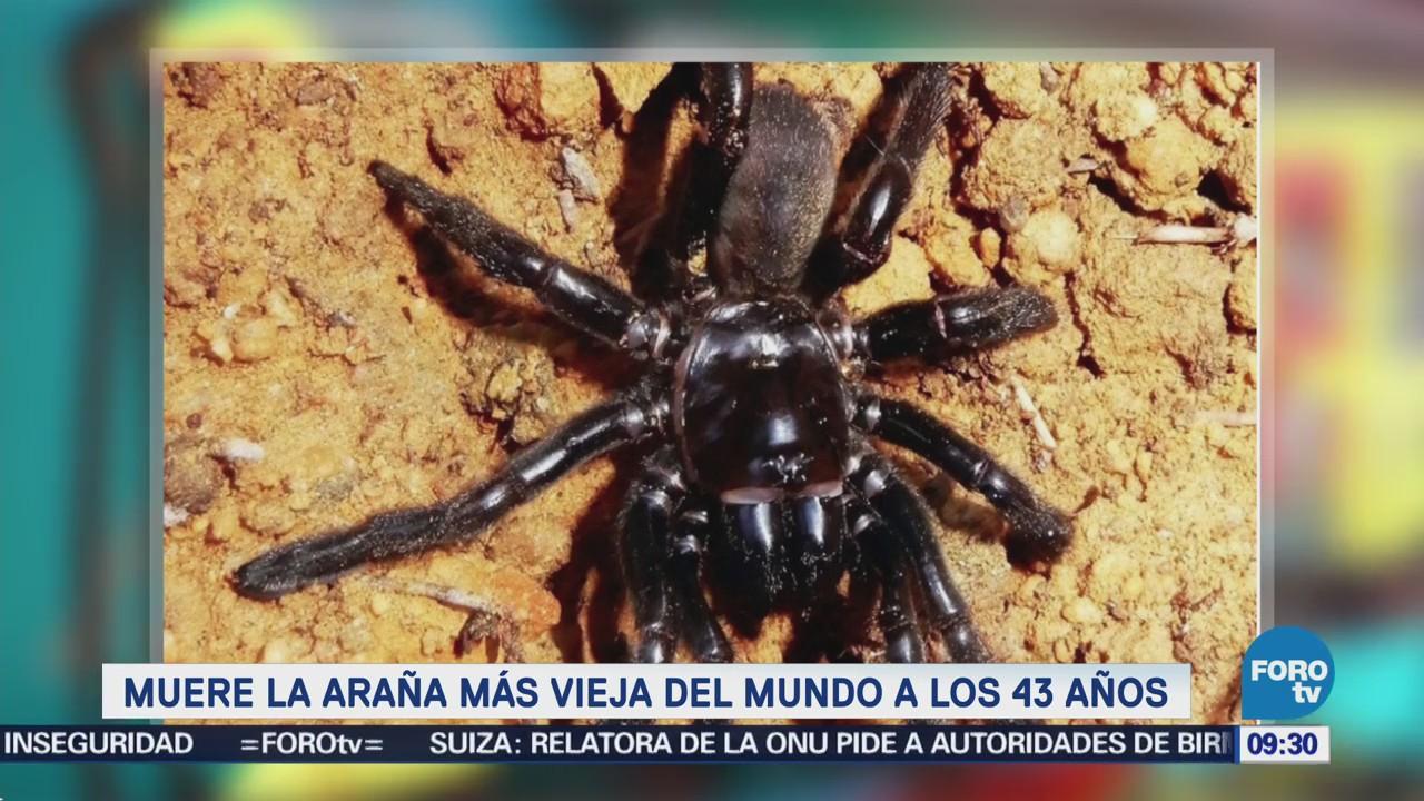 Extra Extra: Muere la araña más vieja del mundo