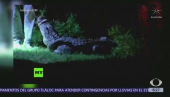 Familia encuentra un caimán debajo de su auto en Texas