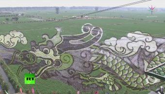 Crean obras arte en cultivos de arroz