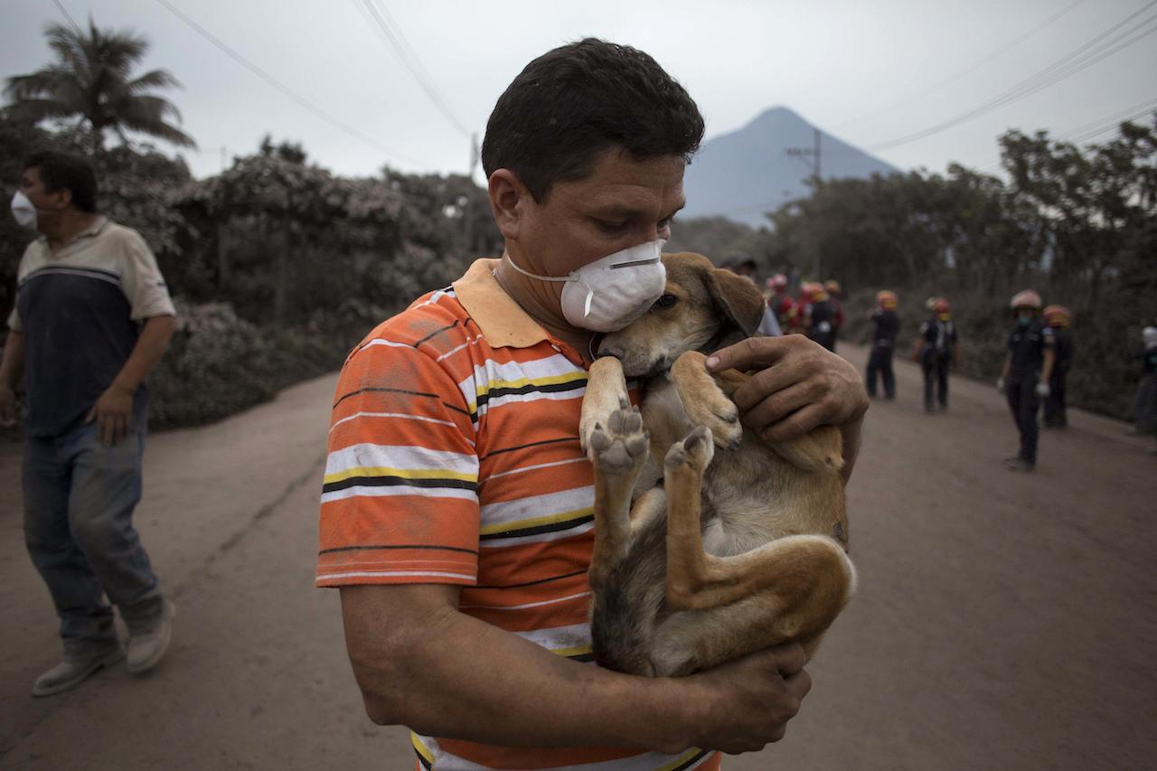 Habitantes, Salvan Animales, Erupción, Guatemala, Volcán De Fuego, Perros